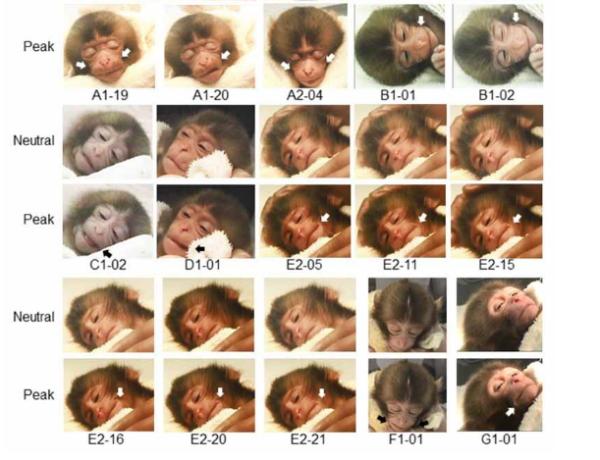 新生児が笑うのは何故?寝ている赤ちゃんの微笑みから声を出して笑うまで