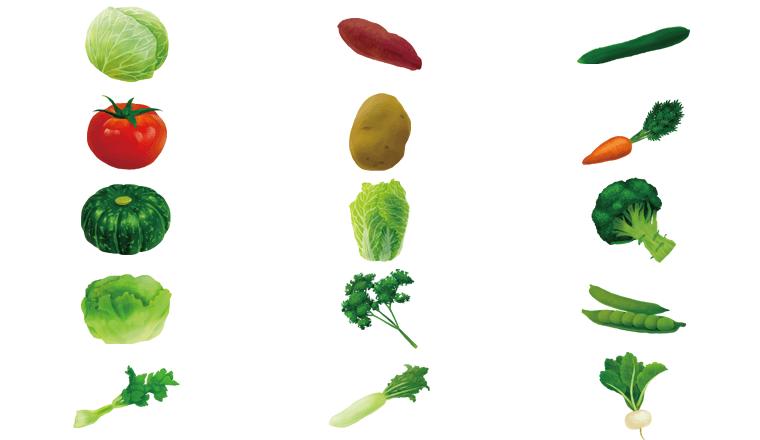 犬が食べられる野菜一覧
