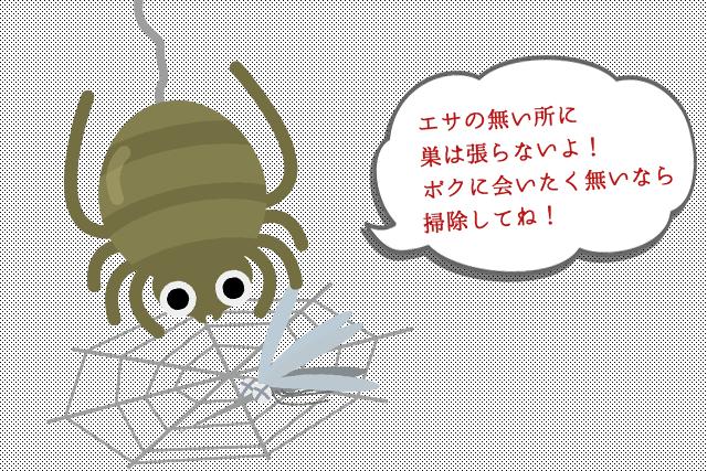 spider04